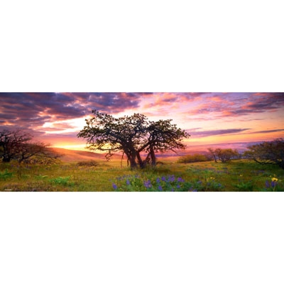 Humboldt Panorama - Oak Tree 29472