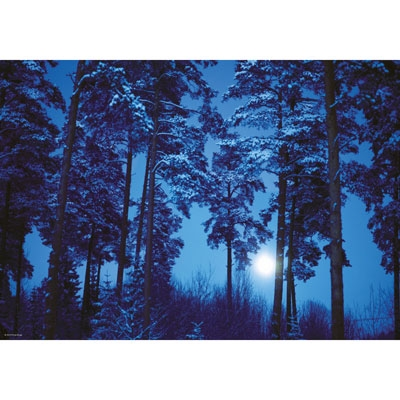 Magic Forests - Full Moon 29625